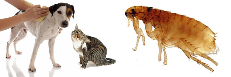 Treat and Prevent Fleas